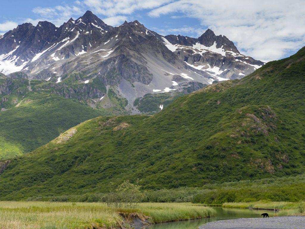 Black bear, Kenai Fjords National Park, Alaska.