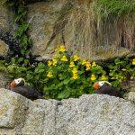 Kenai Fjords Birds
