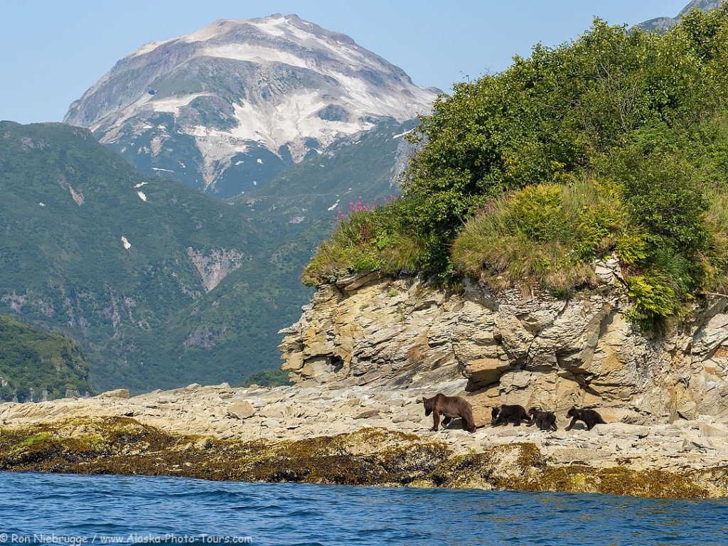 A sow and three cubs, Kinak Bay, Katmai National Park, Alaska.